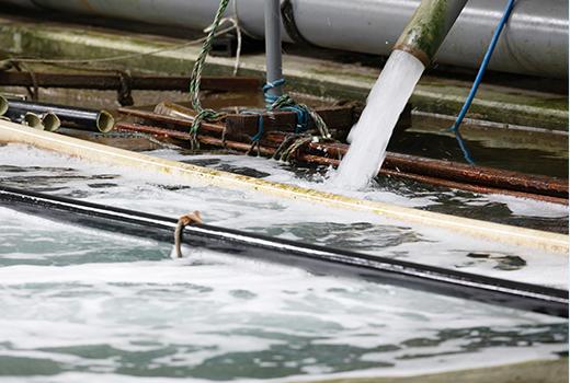 新鮮な海水を水槽に供給